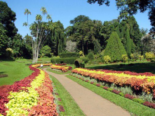 Peradenijos botanikos sodą
